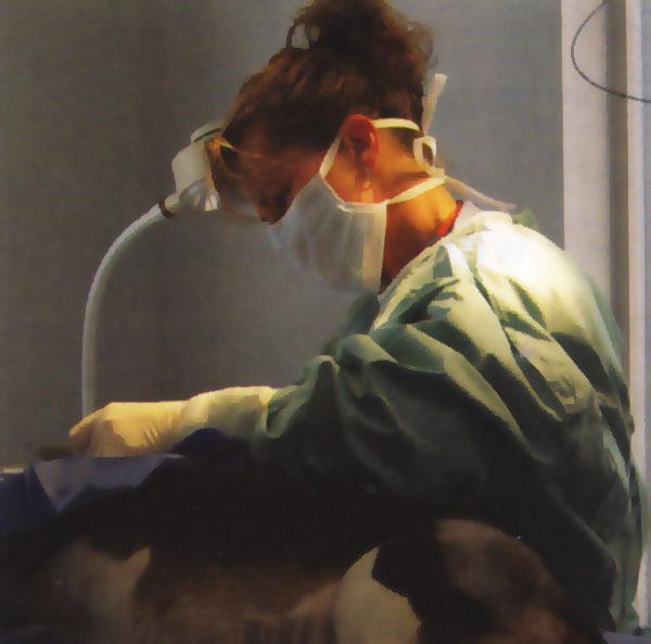 Dr. Rebecca Gore; Rebecca Gore,DVM; Raleigh veterinarian Rebecca Gore; Spring Forest Animal Hospital veterinarian; Dr. Gore