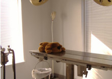 Spring Forest Animal Hospital in Raleigh North Carolina in- house surgical suite, surgery room in Raleigh animal hospital