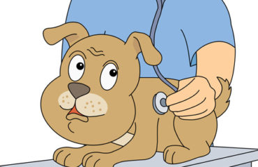 dog getting a physical from the veterinarian in Raleigh